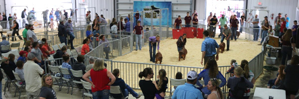 News and Events of Our Local FFA Chapter at Chillicothe RII