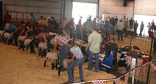 News and Events of Our Local FFA Chapter at Chillicothe ...